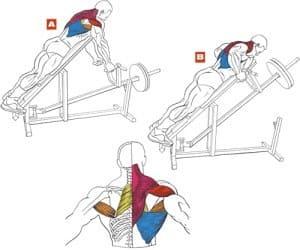 Какие мышцы работают?