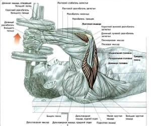 Упражнения для накачивания трицепса в домашних условиях: Упражнение 2