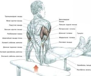 Упражнения для накачивания трицепса в домашних условиях: Упражнение 3