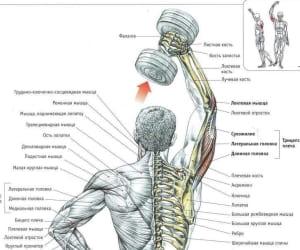 Упражнения для накачивания трицепса в домашних условиях: Упражнение 5