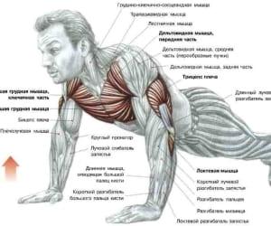 Упражнения для накачивания трицепса в домашних условиях: Упражнение 8