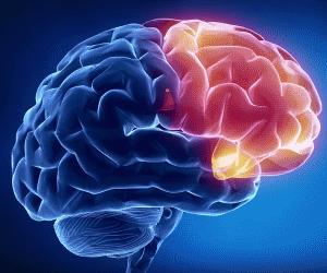 Мозг составляет примерно 2% от всей массы человека. При этом он потребляет порядка 20% всей энергии, которая вырабатывается в теле.