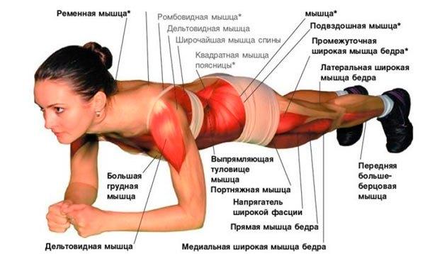 Мышцы, которые напряжены при выполнении упражнения