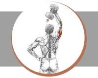 Тренеруем трицепсы: разгибание руки с гантелью из-за головы