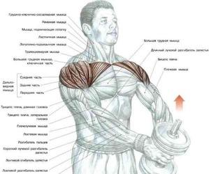 Выполняя указанные действия старайтесь держать спину ровной и не раскачиваться