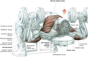 Ноги должны располагаться на полу, создавая уверенный упор для тела