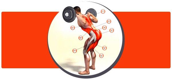 Наклоны со штангой на плечах для укрепления спины и проработки ног
