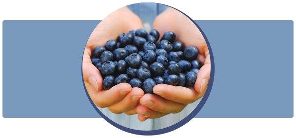 Черника: польза и вред для здоровья организма человека