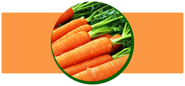 Морковь: калорийность, польза и вред, полезные свойства