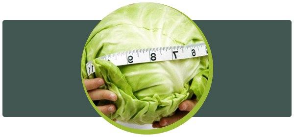 Всё о капустной диете